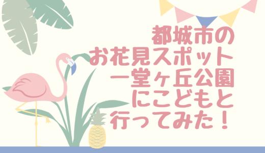 都城市のお花見スポット一堂ヶ丘公園にこどもと行ってみた!桜の見ごろはいつ?
