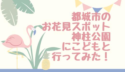 都城市でこどもと桜を楽しむならココ!神柱公園に行ってみた!桜の見ごろは?